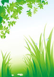 Summer background. Dew on a grass.(vector illustration Stock Images