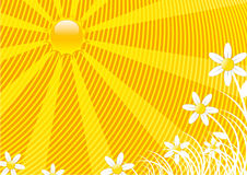 Summer background. Horizontal composition in yellow and white Royalty Free Stock Photo