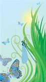 Summer background. Vector illustration summer background with butterfly Royalty Free Stock Image