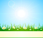 Summer background. With flowers against a Sunburst, illustration Royalty Free Stock Image
