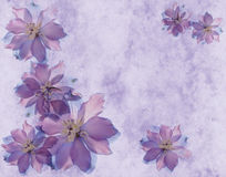 Summer background. With delphinium flowers Stock Images