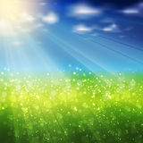 Summer background. Modern nature concept Stock Photo
