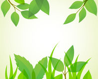 Summer background. Green summer background. Vector illustration Royalty Free Stock Photo