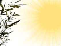 Summer background. Illustration: summer background with sun and bamboo Stock Image