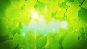 Summer background,beautiful green tree leaves. Summer background, beautiful green tree leaves reveals the soft light of the sun stock video