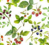Summer background with berries - raspberry, strawberry, bilberry. Watercolor. Repeating pattern with wild herbs and forest berries - raspberry, strawberry Stock Photo
