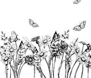 Summer background with Blooming wild flowers, daisies, cornflowers, grass, with butterflies. Vector. Royalty Free Stock Image