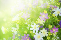 Summer background, bright blur Royalty Free Stock Images