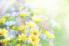 Summer background, bright blur Stock Image
