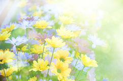 Summer background, bright blur Royalty Free Stock Photos