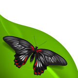 Summer background with butterfly Stock Photos