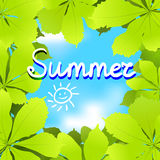 Summer background with chestnut leaves. Vector illustration stock illustration