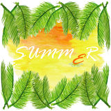 Summer background with coconut leaf Royalty Free Stock Photography