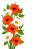 Summer background with colorful beautiful flowers. Royalty Free Stock Photography