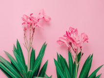 Summer background concept with bouquet of pink oleander tropical Stock Photo