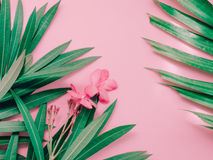 Summer background concept with pink flower bloom of oleander tro Royalty Free Stock Photo