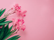 Summer background concept with pink oleander tropical flower arr Royalty Free Stock Images