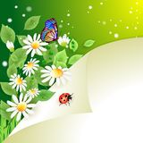 Summer background with daisies. Flowers and lady bug Stock Image