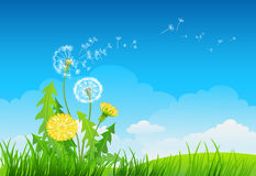 Summer background with dandelion. Grass and sky Royalty Free Stock Image