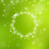 Summer background with dandelion seeds Stock Photography
