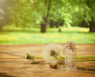 Summer background with dandelion Royalty Free Stock Photography