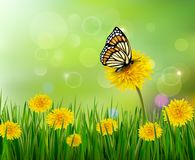 Summer background with dandelions and a butterfly. Royalty Free Stock Photography