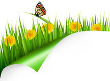 Summer background with dandelions and a butterfly Royalty Free Stock Images