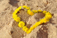 Summer background with dandelions in a heart shape on the sand Stock Photography
