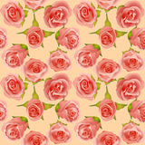 Summer background with delicate roses Stock Images