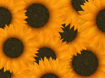 Summer background. Design with sunflowers Royalty Free Stock Photos