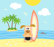 Summer background with dog surfer Stock Photos