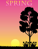Summer Background/eps. A Spring silhouette illustration with a colorful gradient background...eps available, tree leaves can be removed for a bare tree, and Royalty Free Stock Images