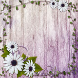 Summer background with flowers Royalty Free Stock Photography