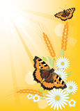 Summer background with flowers and butterflies Royalty Free Stock Photos