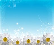 Summer background with flowers Royalty Free Stock Images