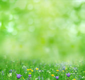 Summer background. Summer   flowers jn green background Stock Image