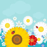 Summer background with flowers and ladybirds. Positive  illustration Stock Photo