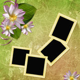 Summer background with frame and flowers Stock Images
