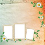 Summer background with frames and flowers Royalty Free Stock Images