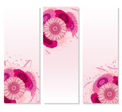 Summer background with Gerbera Royalty Free Stock Image