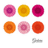Summer background with Gerbera Stock Image