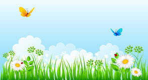 Summer background with grass Royalty Free Stock Photos