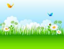 Summer background with grass. Vector illustration of Summer background with grass Royalty Free Stock Photos