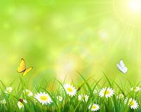 Summer background with grass and flowers Royalty Free Stock Images