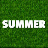 Summer background with grass Stock Image