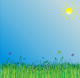 Summer background with green grass Royalty Free Stock Photo
