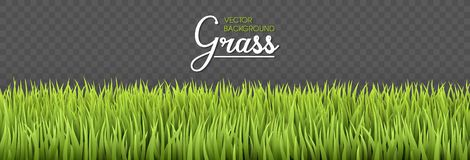 Summer background. Green grass borders. Texture High green fresh grass isolated on transparent background. Vector stock photography