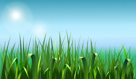 Summer background with green grass. stock illustration