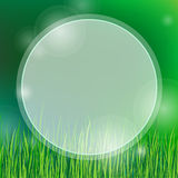 Summer background with green grass Royalty Free Stock Photography
