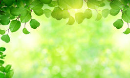 Summer background. With green leaves Royalty Free Stock Photo